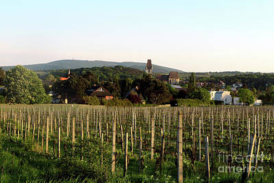 Photograph - Vineyard In Austria by Christian Slanec