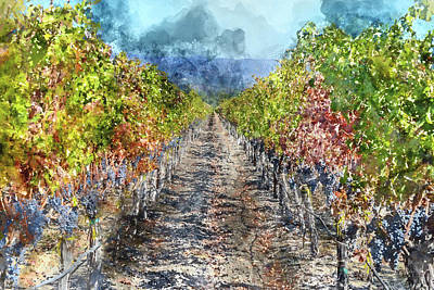 Photograph - Vineyard In Autumn In Napa Valley California by Brandon Bourdages