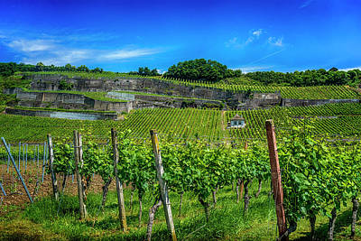 Photograph - Vineyard In Baden-wueberg Germany_dsc7653_16 by Greg Kluempers
