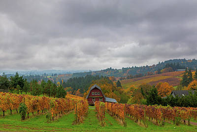 Rural Photograph - Vineyard In Dundee Oregon In Fall Season by David Gn