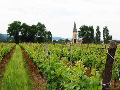 French Countryside Photograph - Vineyard In France by Marion McCristall