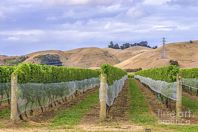 Photograph - Vineyard In Marlborough New Zealand by Patricia Hofmeester