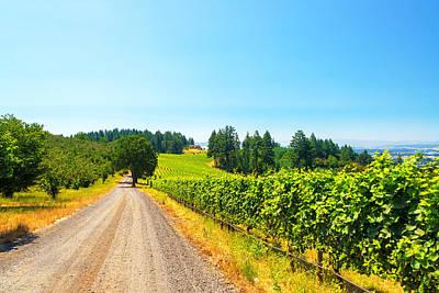 Pinot Noir Photograph - Vineyard In Rural Oregon by Jess Kraft