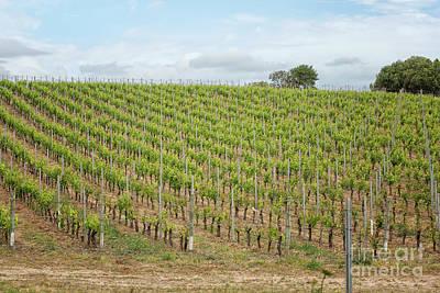Photograph - Vineyard In Sardinia by Patricia Hofmeester