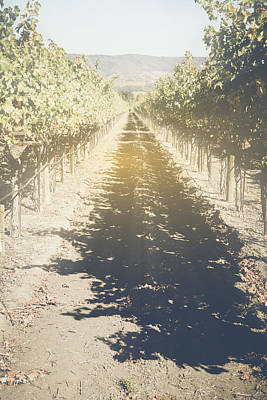 Grapes Photograph - Vineyard In The Fall With Vintage Instagram Style Filter by Brandon Bourdages