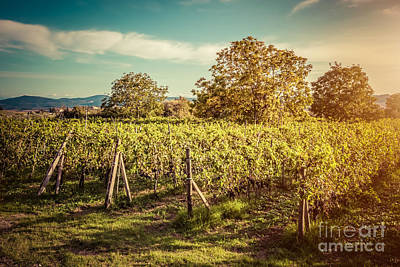 Autumn Landscape Photograph - Vineyard In Tuscany, Italy by Michal Bednarek