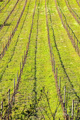 Leinwand Photograph - Vineyard In Winter Canvas by Luca Lorenzelli