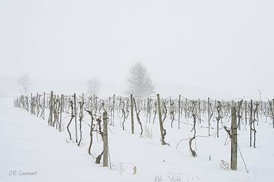 Photograph - Vineyard In Winter by CR Courson