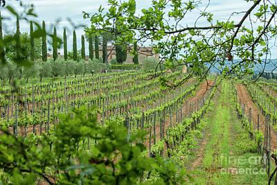 Vineyard Italy Print by Patricia Hofmeester