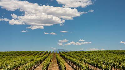 Winery Photograph - Vineyard by Joseph Smith