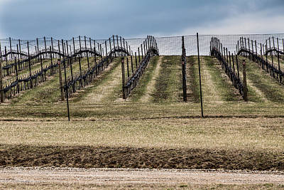 Photograph - Vineyard by Karen Saunders
