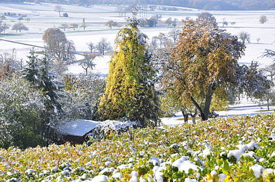 Photograph - Vineyard Landscape Autumns Leaves And Sno by Martin Stankewitz