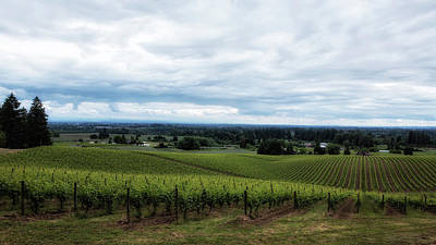 Pinot Noir Photograph - Vineyard On A Cloudy Day by Belinda Greb