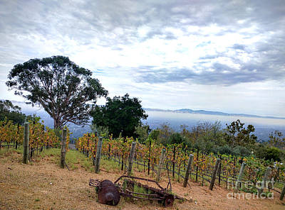 Photograph - Vineyard Over The City by Haleh Mahbod