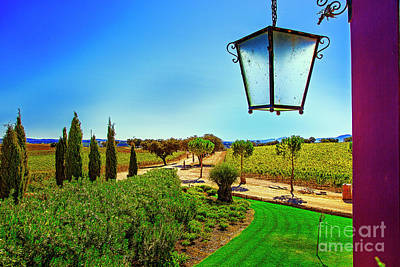 Photograph - Vineyard Road by Rick Bragan