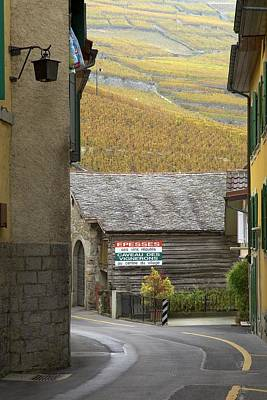 Photograph - Vineyard Road Through Epesses by Colleen Williams
