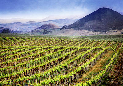 Central Coast Winery Photograph - Vineyard by Scott Kemper