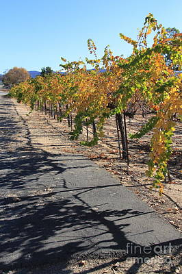 Photograph - Vineyard Shadows by Suzanne Oesterling