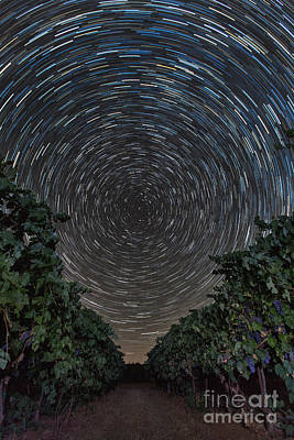 Photograph - Vineyard Star Trails by Michele Steffey