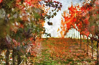 Vineyard Sunset Print by Brandon Bourdages
