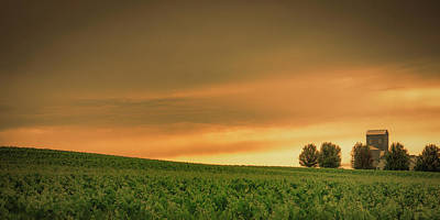 Photograph - Vineyard Sunset by Don Schwartz
