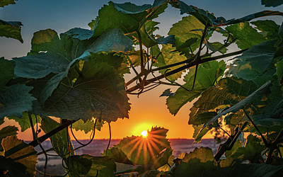 Photograph - Vineyard Sunset by Framing Places