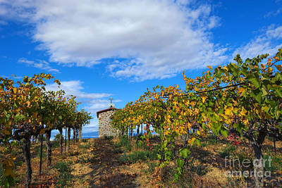 Vineyard Temple Print by Mike Dawson