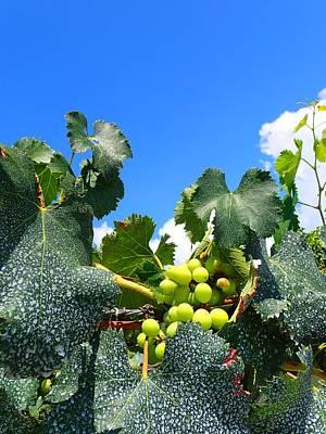 Vineyard Photograph - Vineyard. #vineyard #grape #grapevine #vineyard #yamanashi #bluesky by T Nemo
