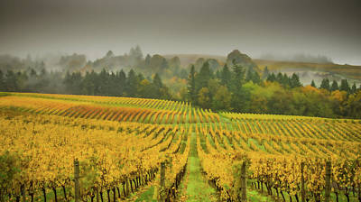 Photograph - Vineyard Waves by Don Schwartz
