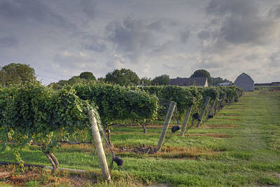 Lenz Wall Art - Photograph - Vineyard With  Barn by Steve Gravano