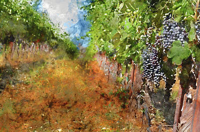Vineyard  With Sunlight In Autumn Art Print by Brandon Bourdages