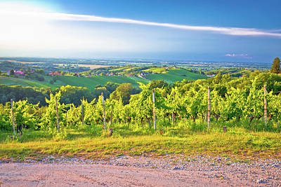 Photograph - Vineyards And Green Landscape Of Medjimurje Region View From Hil by Brch Photography