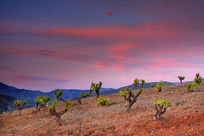 Colorfull Photograph - Vineyards At Sunset In Spain by Guido Montanes Castillo