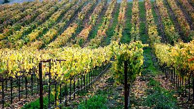 Photograph - Vineyards In Healdsburg by Charlene Mitchell
