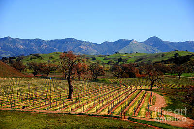 Wine Vineyard Photograph - Vineyards In Santa Ynez Valley Ca by Susanne Van Hulst