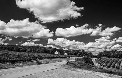 Art Print featuring the photograph Vineyards In Summer II by Steven Ainsworth