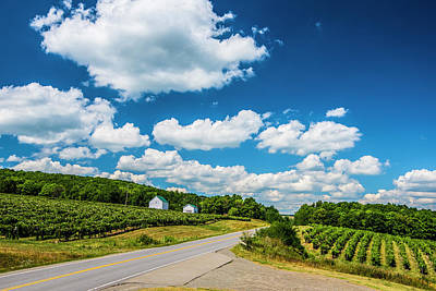 Pastoral Vineyard Photograph - Vineyards In Summer by Steven Ainsworth