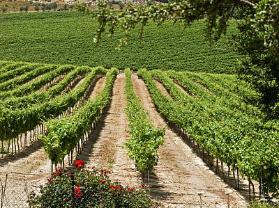 Vineyards In The Galilee 2 Art Print