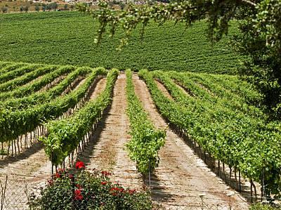 Vineyards In The Galilee 2 Art Print by Arik Baltinester