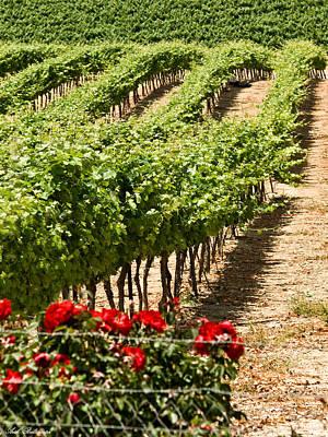 Vineyards In The Galilee  4 Art Print by Arik Baltinester