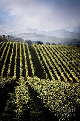 Photograph - Vineyards Of Chianti by Scott Kemper