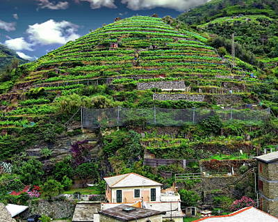 Photograph - Vineyards Of Italy by Anthony Dezenzio
