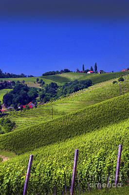 Photograph - Vineyards Of Jerusalem Slovenia by Graham Hawcroft pixsellpix