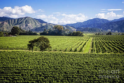 Photograph - Vineyards To Mountains by Scott Kemper