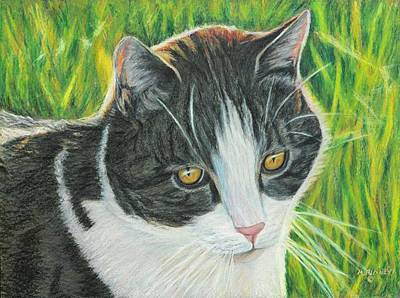 Vinny In Late Afternoon Art Print by Angela Finney