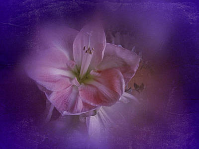 Art Print featuring the photograph Vintage Amaryllis No. 3 by Richard Cummings