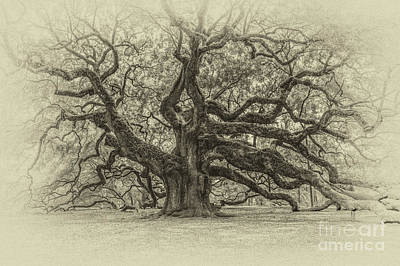 Photograph - Vintage Angel Oak Tree by Dale Powell