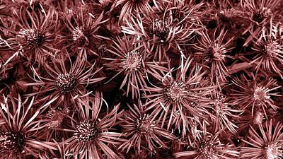 Photograph - Vintage Asters by Danielle R T Haney