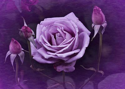 Photograph - Vintage Aug Purple Rose by Richard Cummings