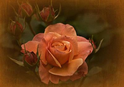 Photograph - Vintage Aug Rose by Richard Cummings